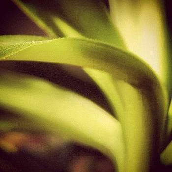 Green Plant 1 by Melissa DuBow