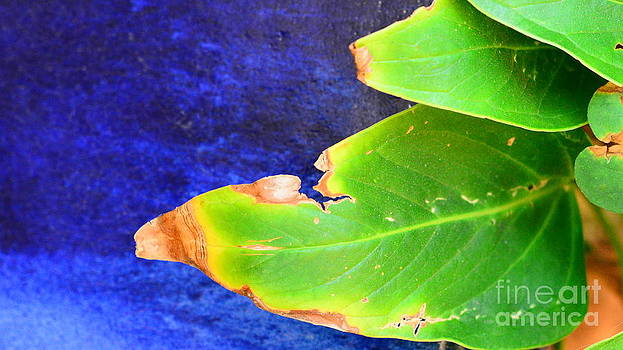 Green And Blue  by Bobby Mandal