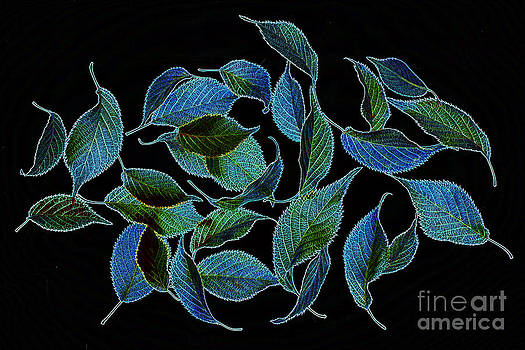 Green and blue leaves on black by Rosemary Calvert
