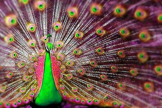 Green and Pink Peacock by Diana Shively