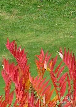 Green And Red by Ausra Huntington nee Paulauskaite