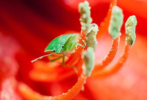 Green by Angel Sosa