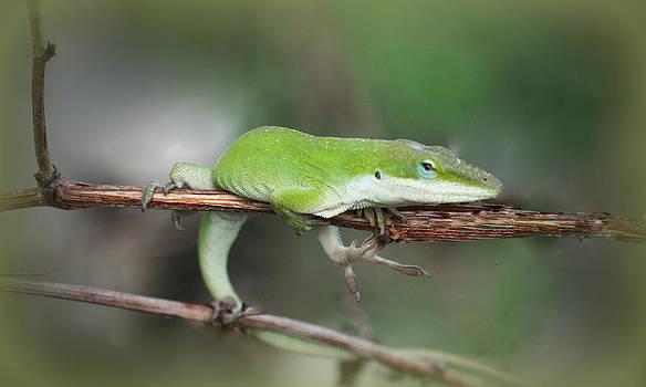 Kathy Peltomaa Lewis - Green Anole Lizard