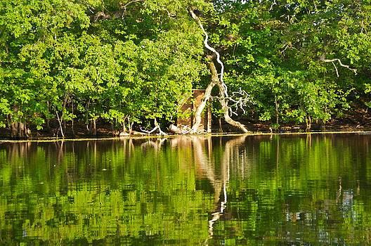 Green Bayou by Catherine Renzini