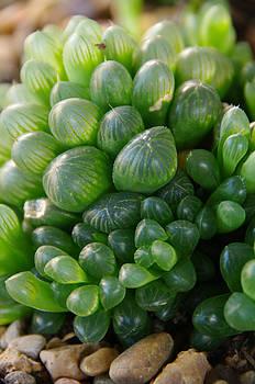 Green Beads by Kristin Clarke
