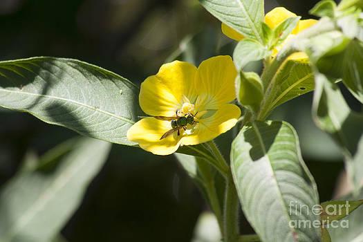 Green Bee by Kristy Ollis