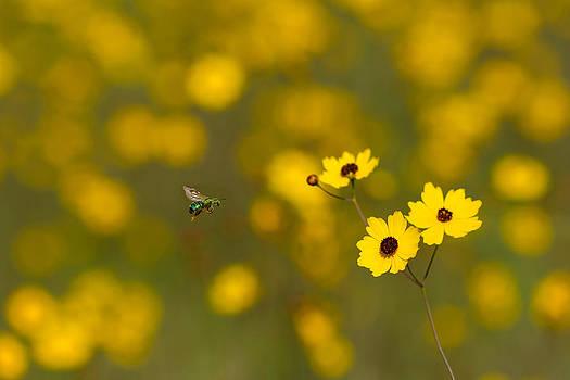Paul Rebmann - Green Bee Yellow Flowers