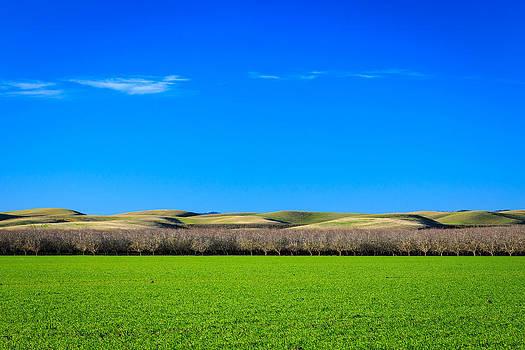 Green Before Blue by Jarred Decker