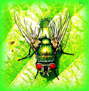 Green Bottle Fly by The Creative Minds Art and Photography