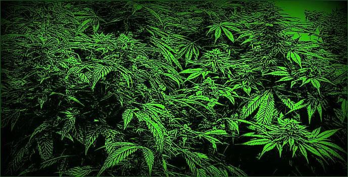 Green Canna Dream by David Munoz