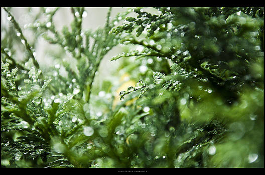 Green Cold Drop by Chris Honninger