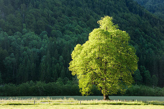Green contrast by Davorin Mance