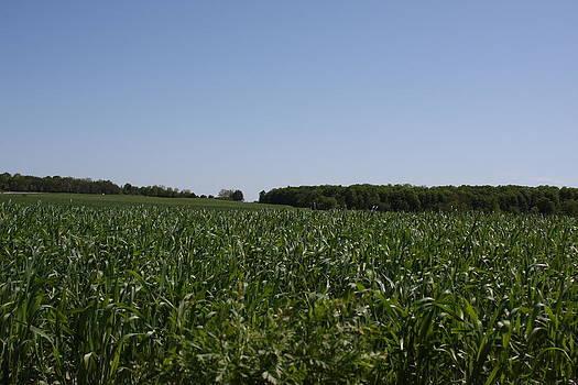 Green Corn I by Edward Kay