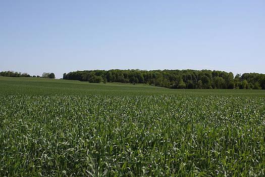 Green Corn II by Edward Kay