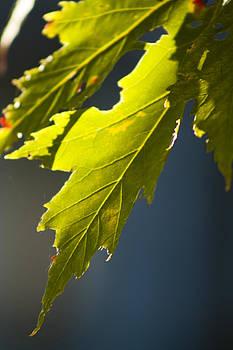 Green Cotyledon by Fredrik Ryden