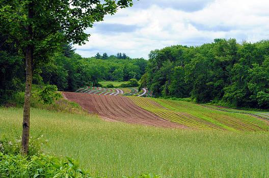 Green Crops by Kenneth Feliciano
