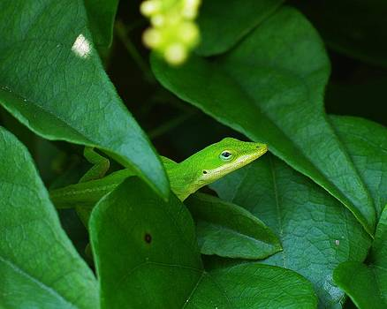Billy  Griffis Jr - Green Enole Hiding