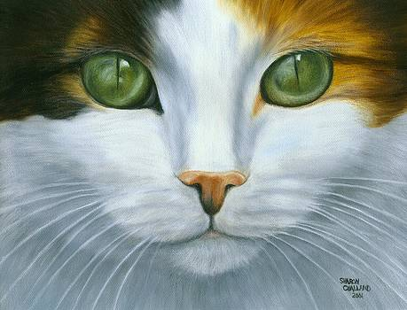 Green Eyed Calico Cat by Sharon Challand