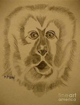 Maria Urso  - Green-Eyed Monkey