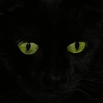 Gothicrow Images - Green Eyes
