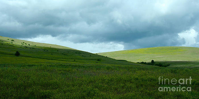 Green Field by Denise Lilly