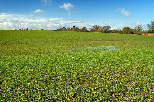 Fizzy Image - green field in english countryside with minor flooding
