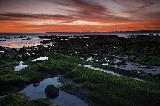 Green Fields by Joao Freire