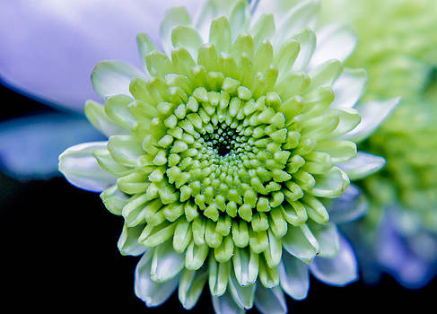 Green flower by Amr Miqdadi