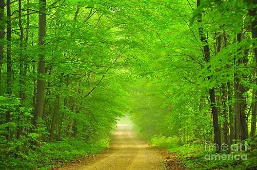 Terri Gostola - Green Forest Tunnel