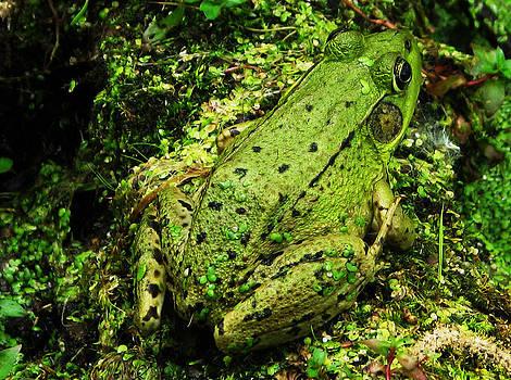 Joe Bledsoe - Green Frog