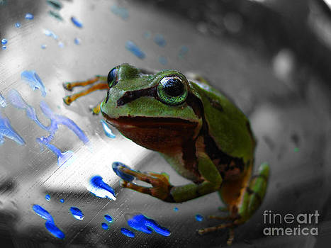 Green Frog by Karisa Kauspedas