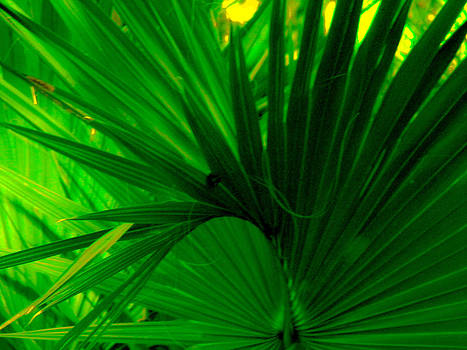 Christy Usilton - Green Frond