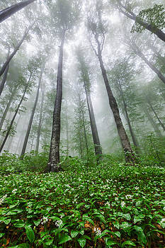 Green Giants by Evgeni Dinev