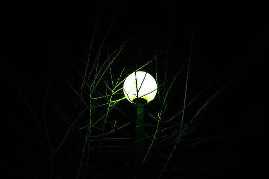 Green Glow by Susanna Raj
