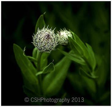 Green Goblin by CSH Photography