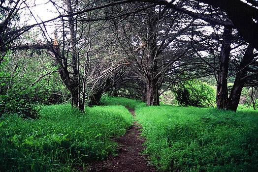 Matt Swinden - Green Grass