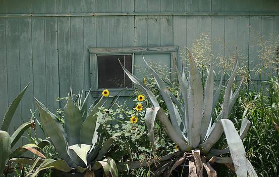 Nina Fosdick - Green Green with Sunflowers