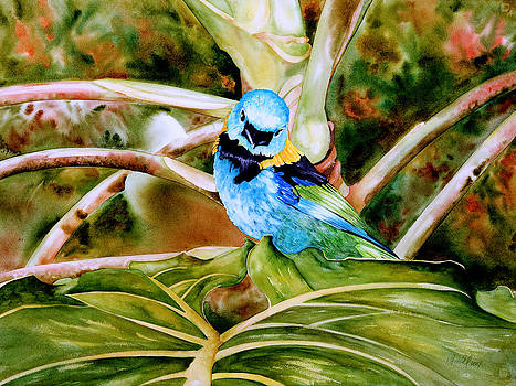 Green-headed Tanager by Kitty Harvill