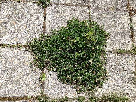 Green Heart by Dana Hermanova