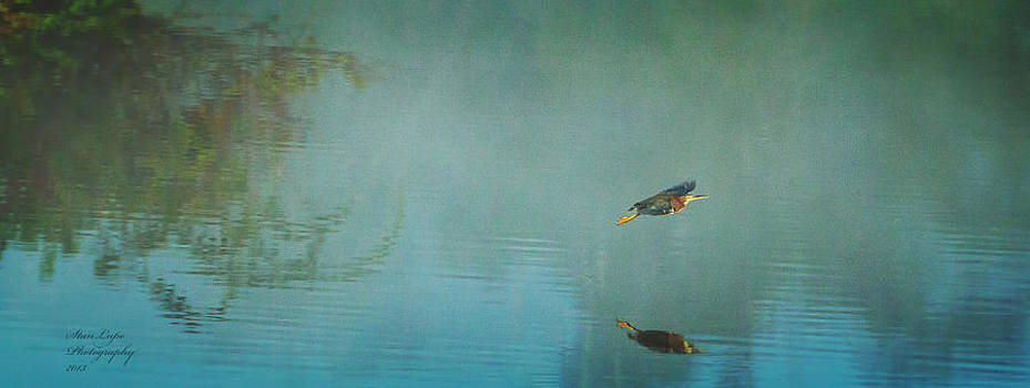 Green Heron Flies Into The Fog by Stanley Lupo