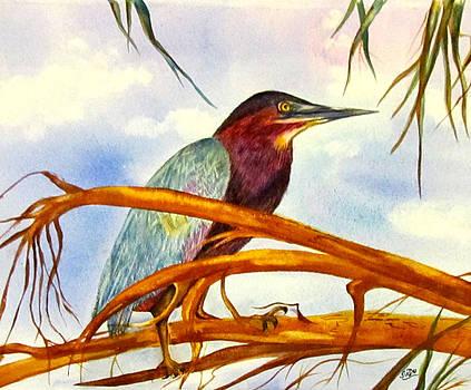 Susan Duxter - Green Heron