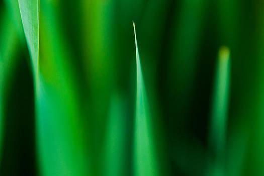 Matt Dobson - Green Impressions