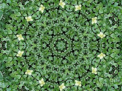 Green kaleidoscope with butterflies by Dana Hermanova