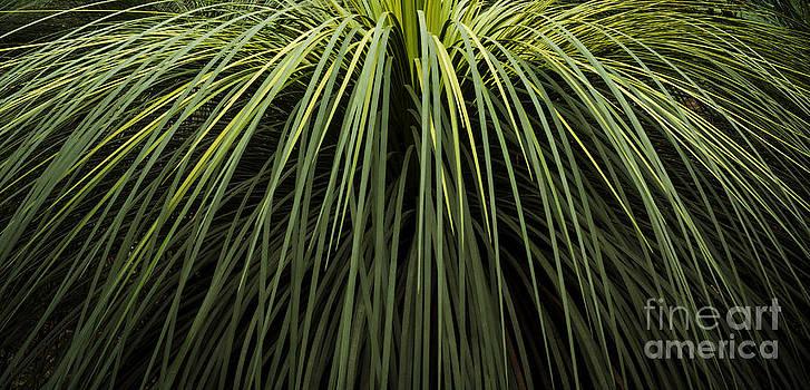 Tim Hester - Green Leaf Background
