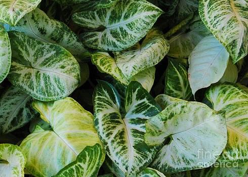 Green leaf by Bobby Mandal