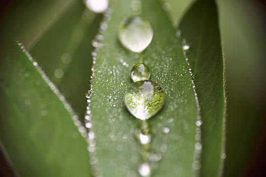 Peggy Collins - Green Leaves and Water Drops