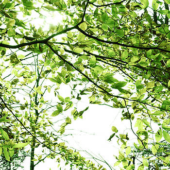 Green Leaves by Blink Images