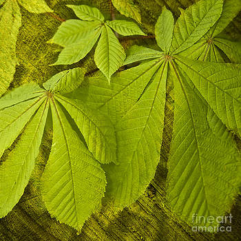 Heiko Koehrer-Wagner - Green Leaves Series