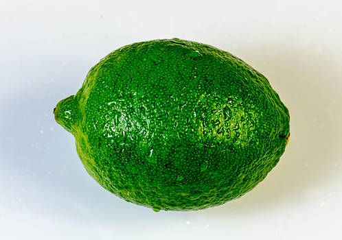 Green lime on white. by Slavica Koceva