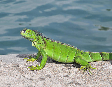 Green Lizard by Al Perry